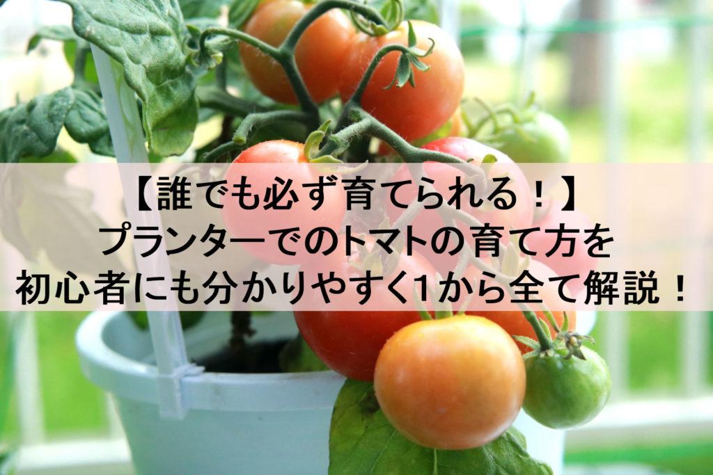 トマト 頻度 やり ミニ 水
